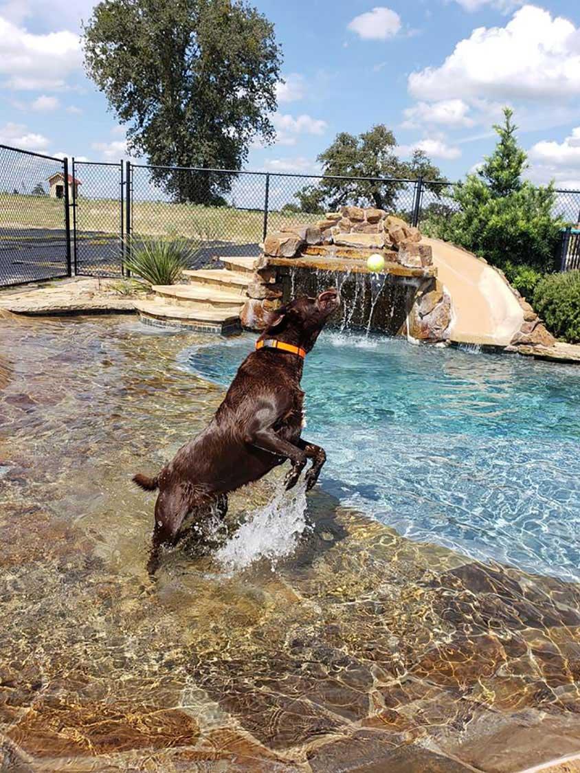 Dog Boarding Athens Tyler Tx Circle Star Pet Resort