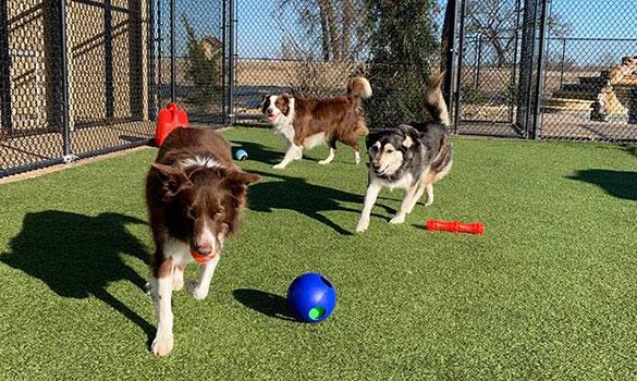 Dog Daycare | Athens, Tyler, Lindale TX | Circle Star Pet Resort