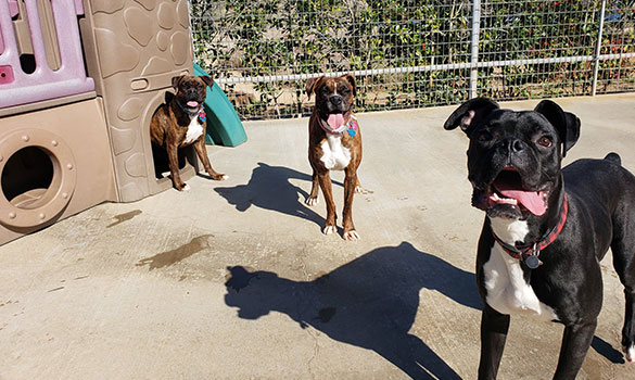 Dog Daycare Lindale TX
